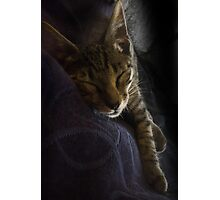 Tiger Sleeping Photographic Print