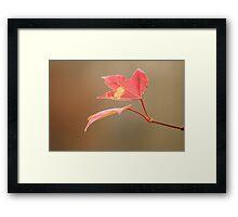 Autumn Leave Framed Print
