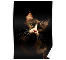 Cat in the dark Poster