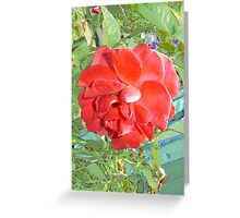 Rose of Red Greeting Card