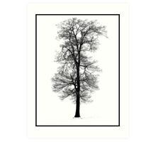 Snow Covered Tree - Hitchin Art Print