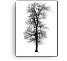 Snow Covered Tree - Hitchin Canvas Print