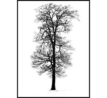 Snow Covered Tree - Hitchin Photographic Print