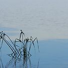 Tranquility by Heather Thorsen
