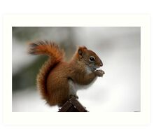 red tail squirrel Art Print