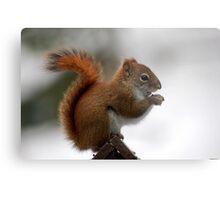 red tail squirrel Metal Print