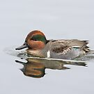 Green-winged Teal by Jim Cumming