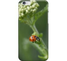 Ladybird, ladybird.... iPhone Case/Skin