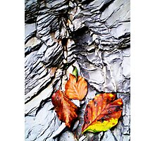 Fall Mountain Leaves, Austria Photographic Print