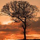 My Favorite Tree by Deborah  Allen