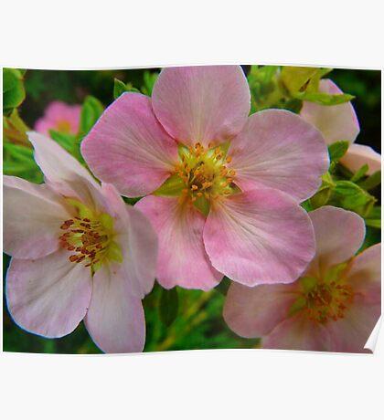 Apple Blossom Delight Poster