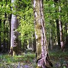 Bluebell Wood by Michael Carter