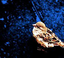 Dear Sparrow by Nathaniel Gillette