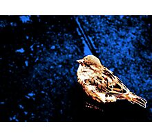 Dear Sparrow Photographic Print