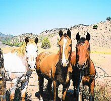 Three Amigos by BettyEDuncan