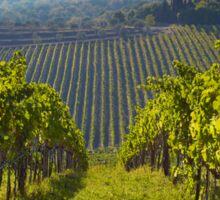 View of Hunter Valley vineyards, NSW, Australia Sticker