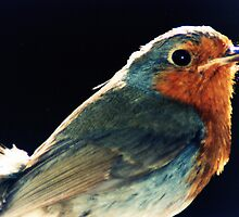 Robins Eye View by loz788