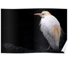 I Have But One Egret Poster