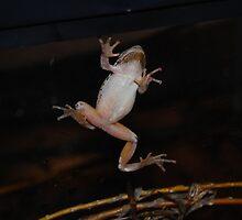 Frog by Dawn Melka
