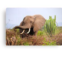 African Elephant - Uganda Metal Print