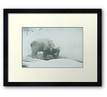 Survival Framed Print