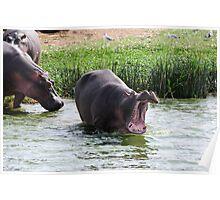 Big Yawn - Kazinga Channel, Uganda Poster
