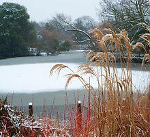 Winter Warmth: Dulwich Park, South London. UK. by DonDavisUK