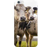 Beef Cattle On A Field iPhone Case/Skin