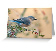 Bluebird in Holly  Greeting Card