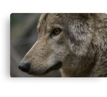 Rescued Timber Wolf 2 Canvas Print