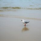 Pelican on the beach by AmyCoomer