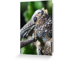 Pine Weevil Profile Greeting Card