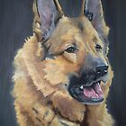 German Shepherd by Ian Morton