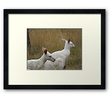 Snow Kangaroos Framed Print