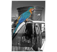 Perched Macaw Poster