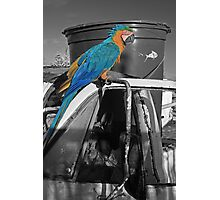 Perched Macaw Photographic Print