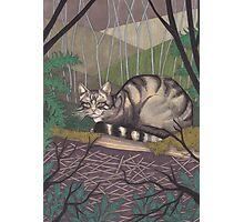 Highland Tiger Photographic Print