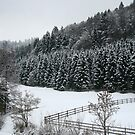 Einsiedeln Woods in Winter by Ori Kaydar