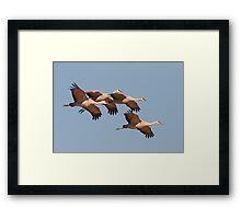 0102104 Sandhill Cranes Framed Print