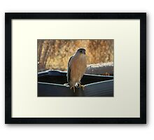 Waiting for Her Supper to Arrive Framed Print