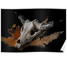 Cow Skull in duo tone Poster