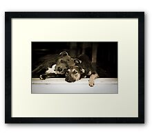 Booze Hounds  Framed Print