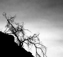 Tree on the Hill: Box Canyon Road by toby snelgrove  IPA