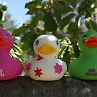 ducks in the apple tree! by CarrieCollins