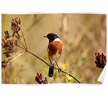 Stone Chat Poster