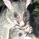 Harley and Spike (Brushtail Possums) by BronReid