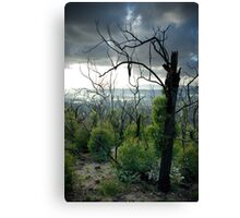 Bush regeneration, Kinglake Vic Canvas Print