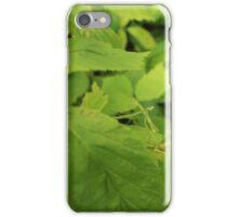 Praying Mantis iPhone Case/Skin