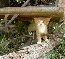 Romanian Country Cat by AndyCondratov