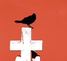 crow by scottthompson